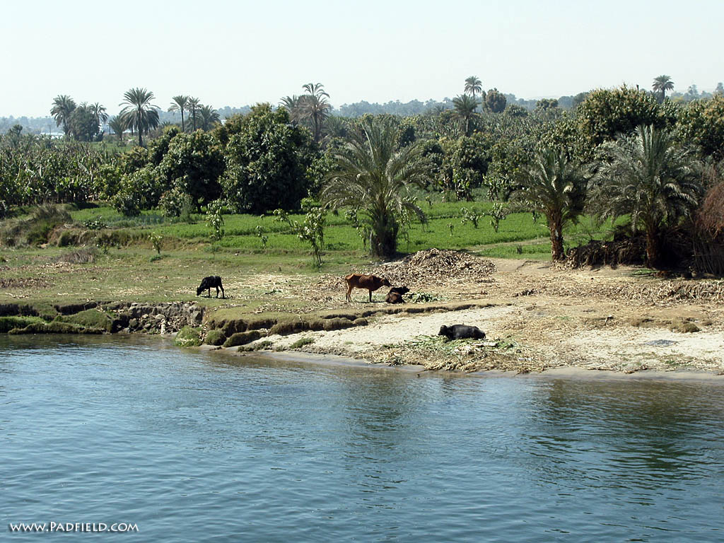 Nile River, Egypt Photographs  Moses, Joseph  Free for use in