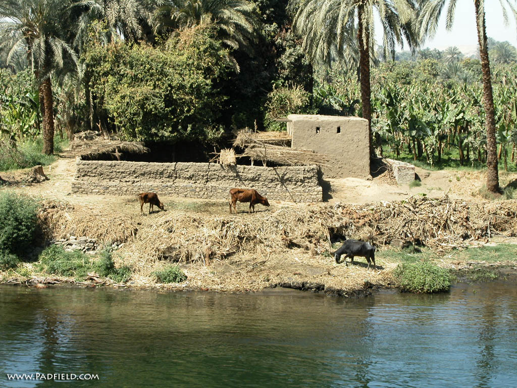 Many Nile River cruises also